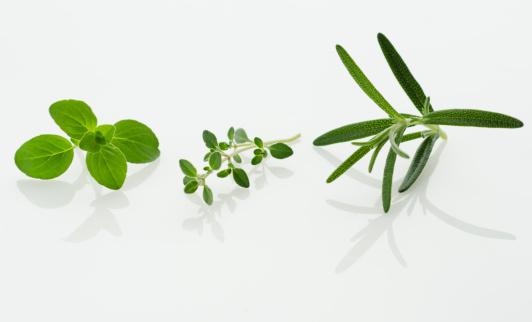Rosemary「Studio shot of herb seedlings」:スマホ壁紙(1)