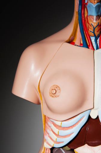 Breast「Studio shot of anatomical model」:スマホ壁紙(12)
