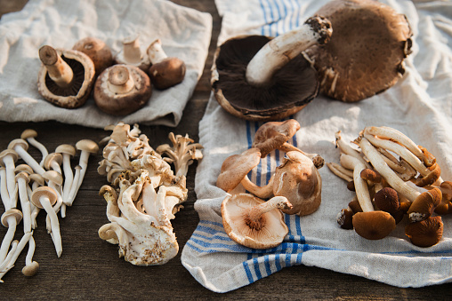 シイタケ「Studio shot of mushrooms on dishcloth」:スマホ壁紙(6)
