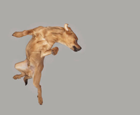 Mid-Air「Studio shot, Portrait of a Dog」:スマホ壁紙(0)