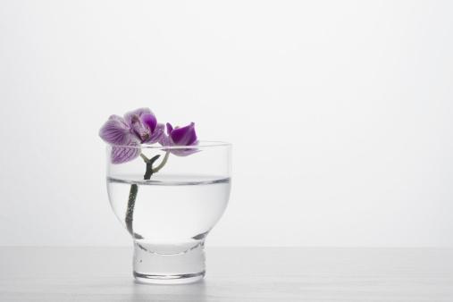 Tropical Flower「Studio shot of orchid」:スマホ壁紙(15)