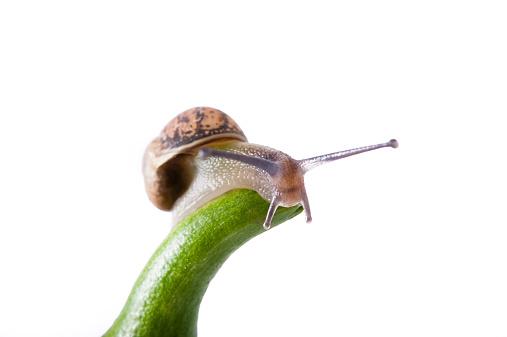 カタツムリ「Studio shot of snail on green stem」:スマホ壁紙(8)