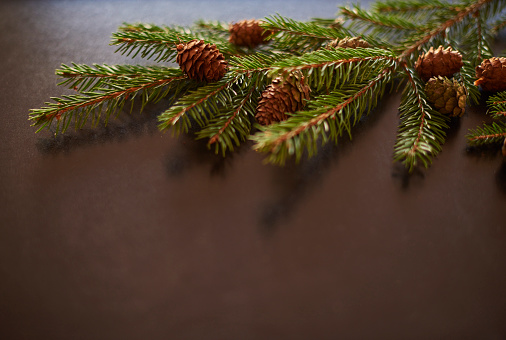 Pine Cone「Studio shot of branch and pine cones. Debica, Poland」:スマホ壁紙(18)