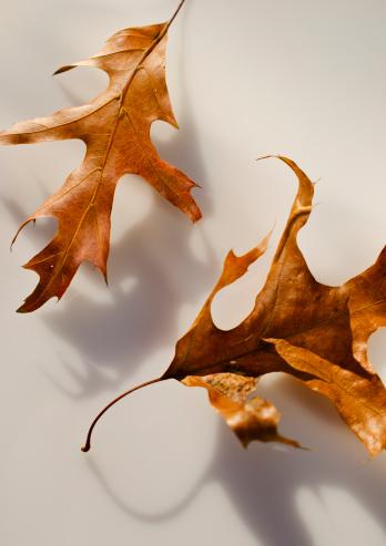 秋「Studio shot of autumn leaves」:スマホ壁紙(0)