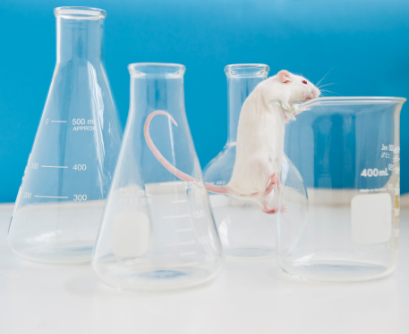 Mischief「Studio shot of white mouse climbing laboratory vial」:スマホ壁紙(7)
