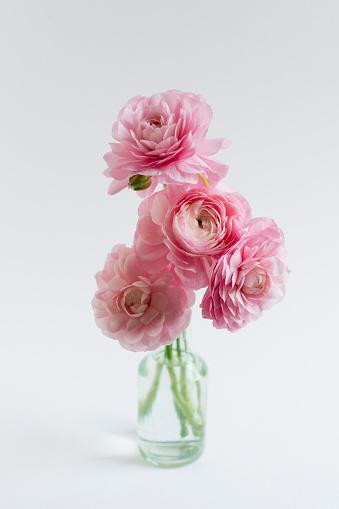 Flower Head「Studio shot of bunch of ranunculus in glass vase on white background」:スマホ壁紙(14)
