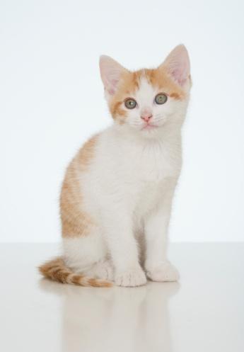 子猫「Studio shot of kitten」:スマホ壁紙(19)