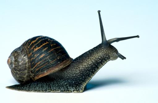 snails「Studio shot of live snail」:スマホ壁紙(0)
