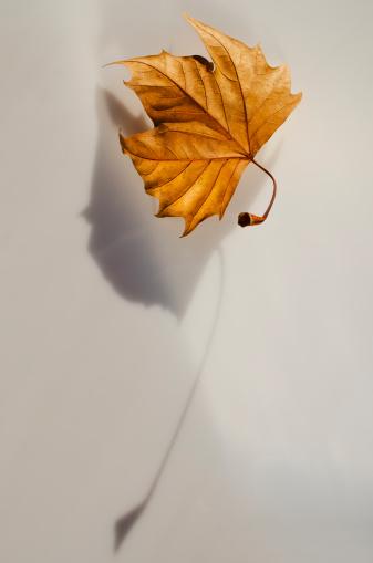 秋「Studio shot of autumn leaf」:スマホ壁紙(1)