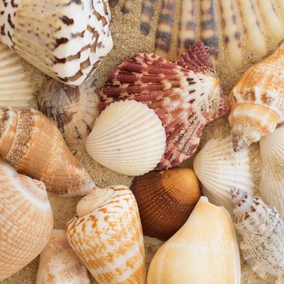 貝殻「Studio shot of seashells」:スマホ壁紙(16)