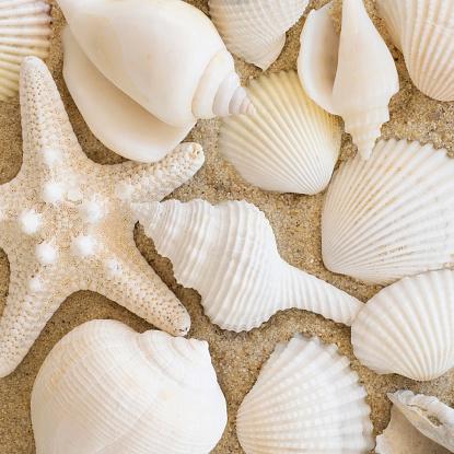 貝殻「Studio shot of seashells」:スマホ壁紙(7)