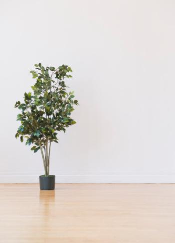 Fig「Studio shot of potted plant」:スマホ壁紙(13)