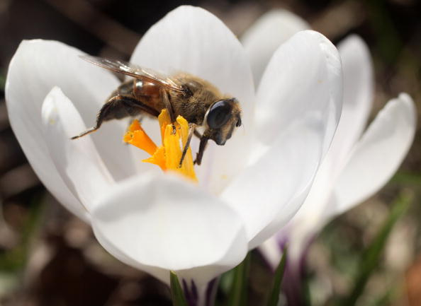 Stamen「The First Signs Of Spring Are Seen At Kew Gardens」:写真・画像(12)[壁紙.com]