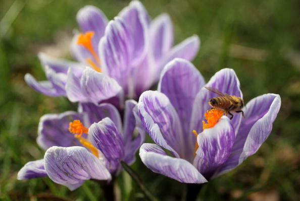 Stamen「The First Signs Of Spring Are Seen At Kew Gardens」:写真・画像(11)[壁紙.com]