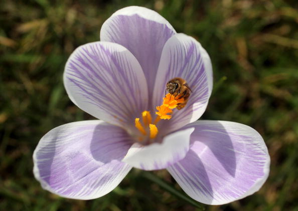 Stamen「The First Signs Of Spring Are Seen At Kew Gardens」:写真・画像(17)[壁紙.com]