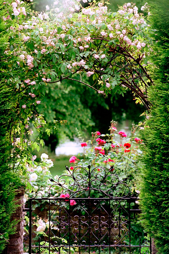 バラ「庭園のゲート」:スマホ壁紙(14)
