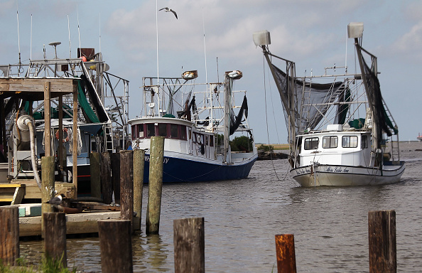Crustacean「Gulf Coast Struggles With Oil Spill And Its Economic Costs」:写真・画像(19)[壁紙.com]