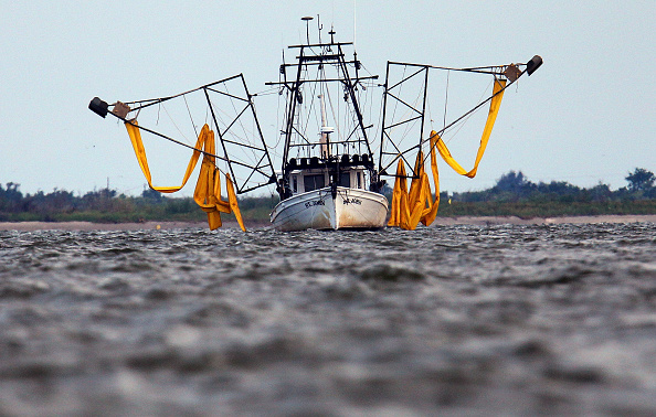 Crustacean「Gulf Coast Struggles With Oil Spill And Its Economic Costs」:写真・画像(18)[壁紙.com]