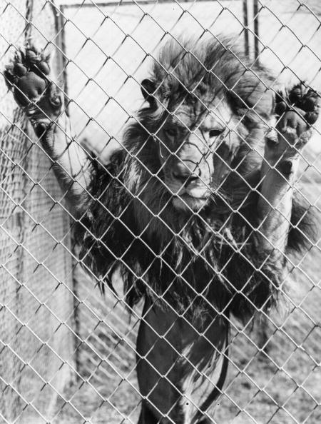 動物「Lion's Den」:写真・画像(16)[壁紙.com]