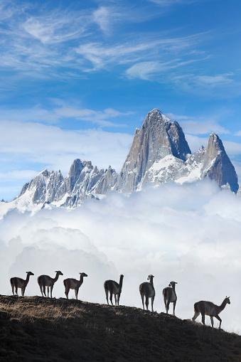 Guanaco「Blue sky over Fitz Roy guanacos Patagonia Argentina Southamerica」:スマホ壁紙(1)