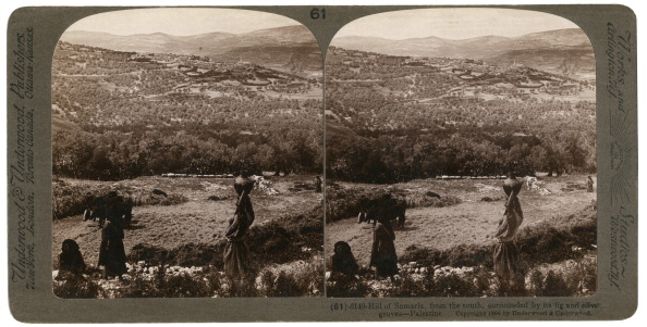 Grove「The Hill of Samaria, from the south, surrounded by its fig and olive groves, Palestine, 1900.Artist: Underwood & Underwood」:写真・画像(5)[壁紙.com]