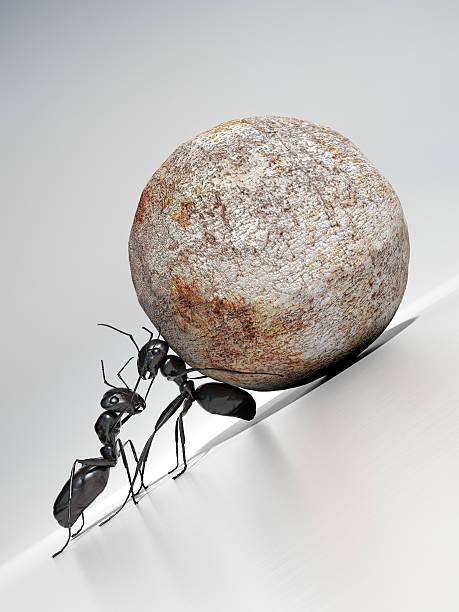 Teamwork:スマホ壁紙(壁紙.com)