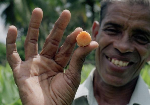 Herb「Kerala, India」:写真・画像(5)[壁紙.com]