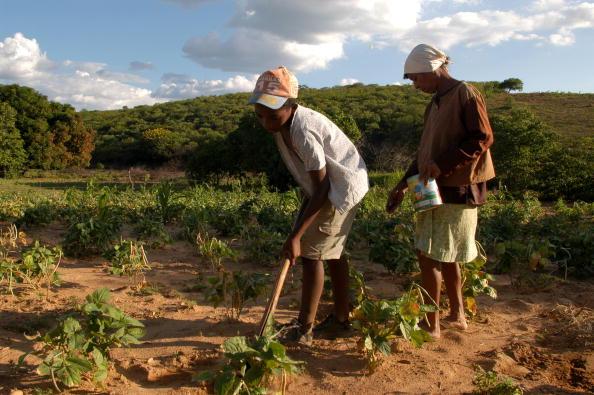 Binary Code「Brazil Initiates Program To Eradicate Malnutrition」:写真・画像(12)[壁紙.com]