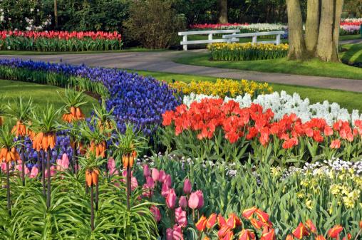 Keukenhof Gardens「Tuilp varieties , Keukenhof gardens, The Netherlands」:スマホ壁紙(7)