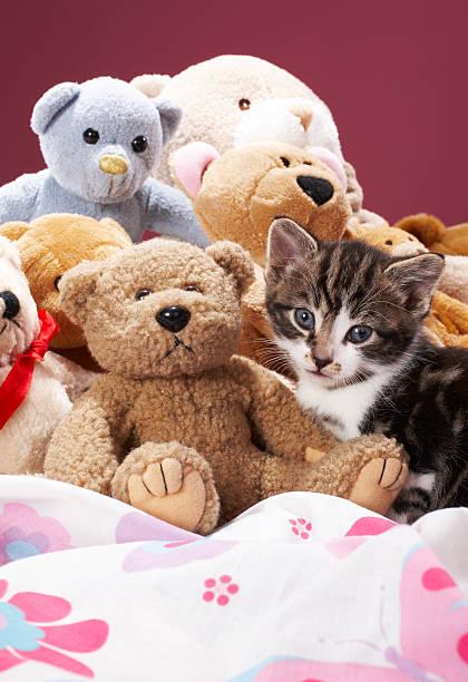 Kitten nestled amongst soft toys:スマホ壁紙(壁紙.com)