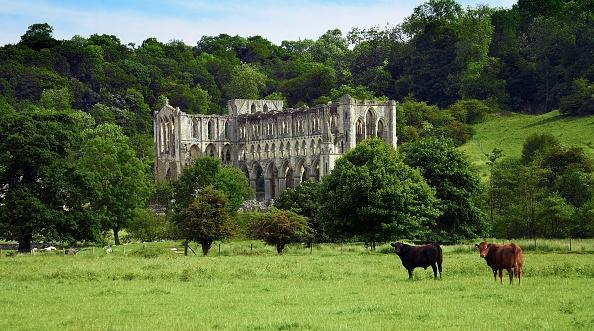 Pasture「Rievaulx Abbey」:写真・画像(18)[壁紙.com]