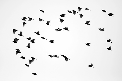 Flock Of Birds「Flock of Sparrows」:スマホ壁紙(16)
