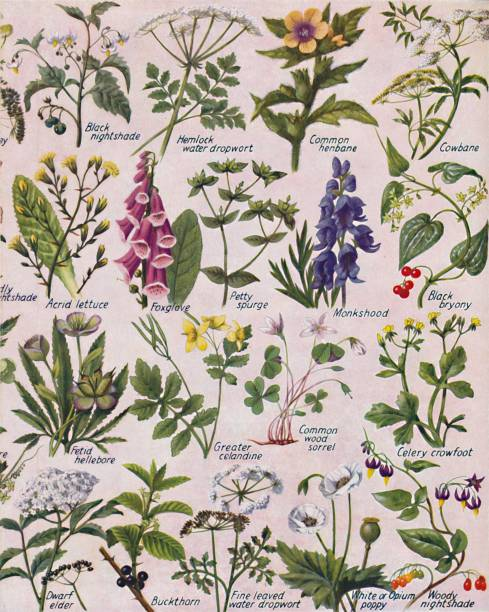 Poisonous Plants Found In The British Isles:ニュース(壁紙.com)