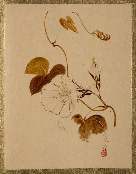 朝顔「Morning Glory. Creator: Shibata Zeshin.」:写真・画像(5)[壁紙.com]