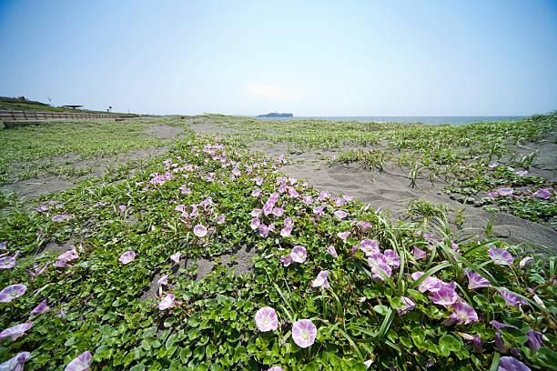 Morning glory on beach:スマホ壁紙(壁紙.com)