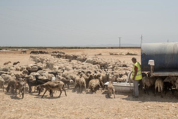 トップランキング「Climate Change Warnings As Southern Spain's Deserts Expand Due To Drought」:写真・画像(11)[壁紙.com]