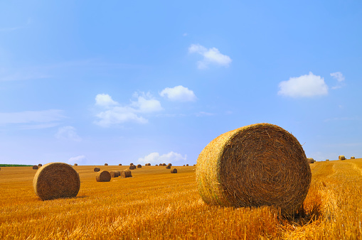 Harvesting「Field of hay bales」:スマホ壁紙(17)