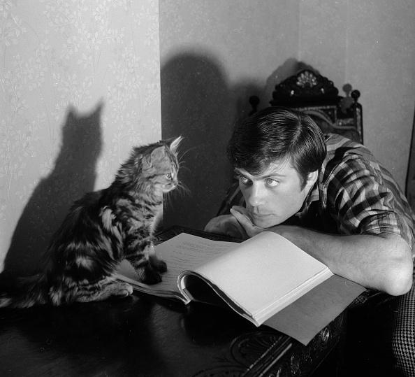 猫「Oliver And Felix」:写真・画像(14)[壁紙.com]