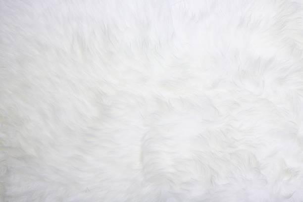 ホワイトのファー:スマホ壁紙(壁紙.com)
