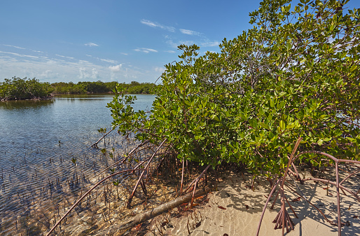 Beauty「Mangroves in a quiet backwater on a small Caribbean island.」:スマホ壁紙(10)