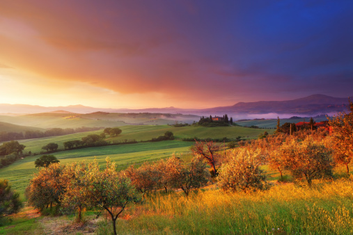 Italian Cypress「Farm and olive trees in Tuscany at dawn」:スマホ壁紙(17)