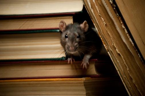 Literature「Rat with book」:スマホ壁紙(16)