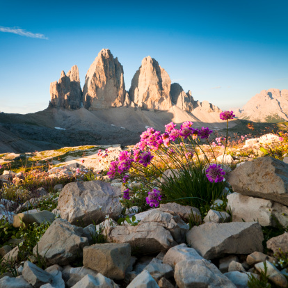 Alto Adige - Italy「Tre Cime di Lavaredo and wildflowers」:スマホ壁紙(8)