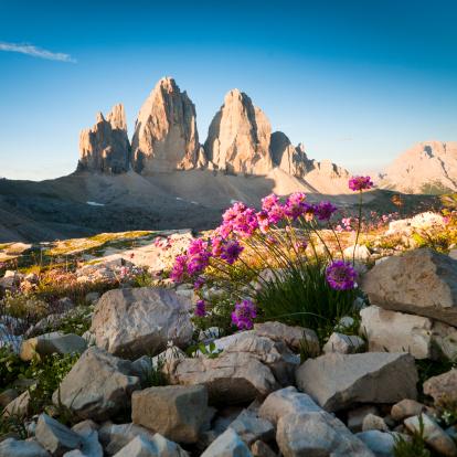 UNESCO「Tre Cime di Lavaredo and wildflowers」:スマホ壁紙(4)