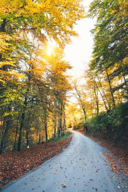 Autumn Road:スマホ壁紙(壁紙.com)