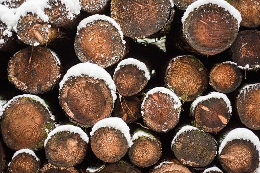 Deforestation「Stack of logs in the snow」:スマホ壁紙(11)