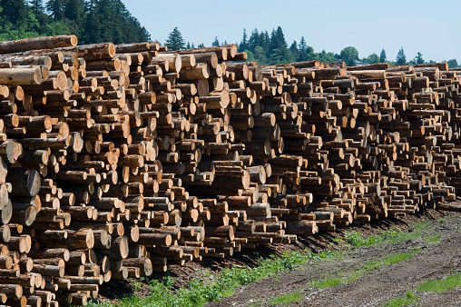 Lumber Industry「Stack of Logs」:スマホ壁紙(16)