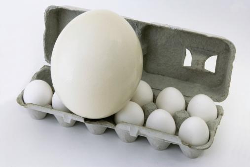 Animal Egg「Egg-ceeding Egg-spectations」:スマホ壁紙(13)