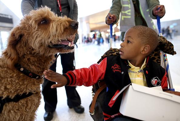 動物・ペット「Therapy Dogs Soothe Harried Passengers At San Francisco Int'l Airport」:写真・画像(17)[壁紙.com]
