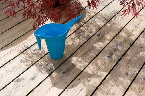 Japanese Maple「Unusual blue watering can on timber decking」:スマホ壁紙(6)